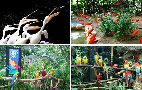 5 địa điểm đẹp nổi tiếng phải tới thăm khi tới Singapore
