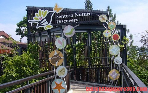 Một số địa điểm thú vị, tuyệt đẹp không thể bỏ qua trên đảo Sentosa singapore
