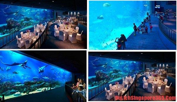 Điểm du lịch lí tưởng giá rẻ không nên bỏ lỡ. Du lịch thủy cung S.E.A Aquarium Singapore muôn màu giá rẻ đầy ấn tượng