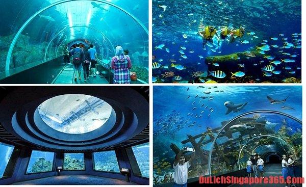 Du lịch tham quan thủy cung S.E.A Singapore muôn màu giá rẻ. Thủy cung lộng lẫy, hiện đại là sản phẩm nhân tạo tạo môi trường bảo tồn sinh vật biển