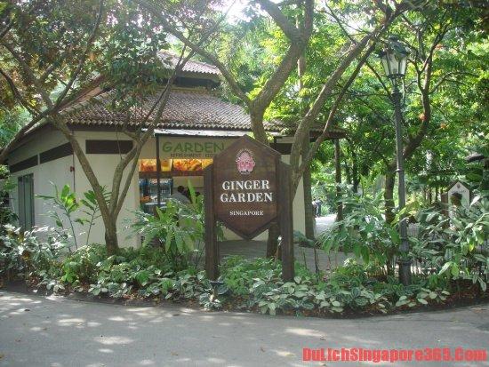 Vườn gừng quý tại vườn Bách thảo Singapore. Hướng dẫn tham quan vườn Bách thảo Singapore nhanh nhất