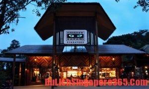 Kinh nghiệm du lịch vườn thú Night Safari Singapore