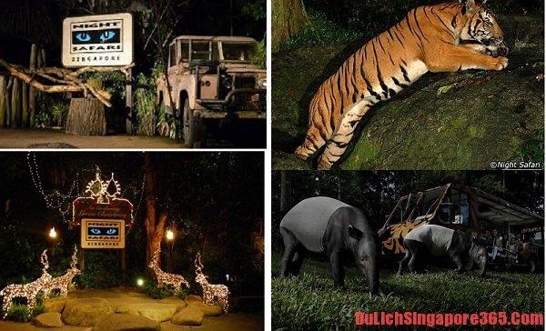 Kinh nghiệm du lịch vườn thú đêm Singapore hấp dẫn bổ ích