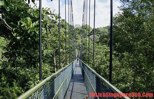 Khám phá những cây cầu đẹp nhất tại Singapore