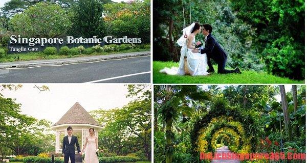 Vườn Bách thảo Botanic địa điểm chụp ảnh cưới đẹp ở Singapore lí tưởng tráng lệ không nên bỏ lỡ. Đây là dịp ghi dấu lại khoảnh khắc hạnh phúc có một không hai của các cặp đôi