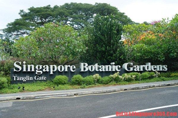 Hướng dẫn tham quan vườn Bách thảo Singapore chi tiết nhất - Giá vé, giờ mở cửa, lịch trình