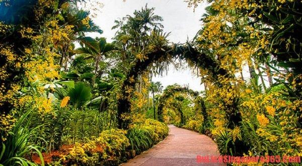 Hướng dẫn tham quan vườn Bách thảo Singapore nhanh nhất, cụ thể nhất. Vườn lan quốc gia đẹp tại Singapore.