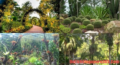 Vườn bách thảo nơi bạn nên đến tại Singapore