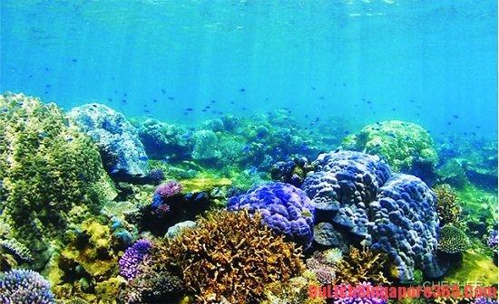 Hướng dẫn du lịch đảo Pulau Hantu đầy đủ và chi tiết