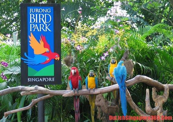 Điểm du lịch bụi SIngapore, lộ trình du lịch Singapore, tourr du lịch Singapore 3 ngày 2 đêm