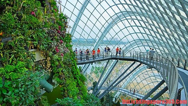 Kinh nghiệm du lịch Garden by the Bay