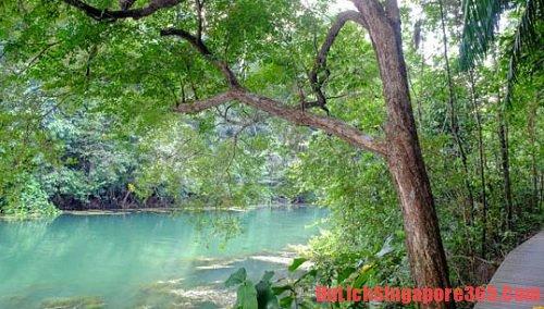 Công viên MacRitchie nơi bạn nên đến nghỉ ngơi, thư giãn