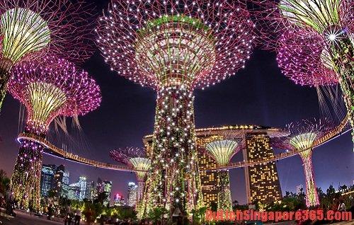 Ngắm nhìn vẻ đẹp của siêu cây là điều bạn nên làm khi đến Singapore