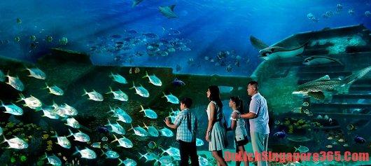 Du lịch thủy cung S.E.A aquarium Singapore giá rẻ